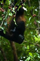 Hanging by lynsea