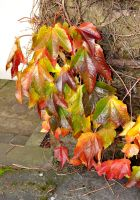 Autumn Cluster by Sandgroan
