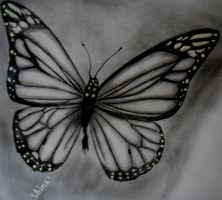 butterfly by ShinzaK