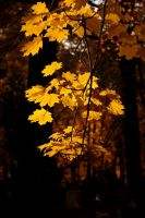 autumn leaves by Beatrice88