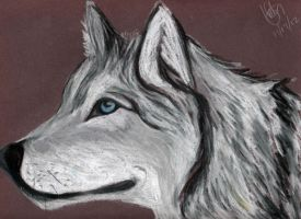 white wolf by KaichouAngel