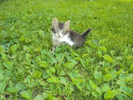 In a clover field by ChesneyCat