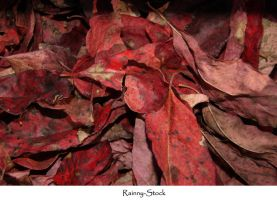 leaves texture red by Rainny-Stock