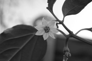 Day 11: Curves in BW by YaoiTeachings101