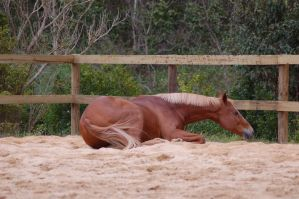 TB laying down side on in sand by Chunga-Stock