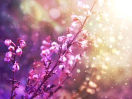 Touch of Light by Floreina-Photography