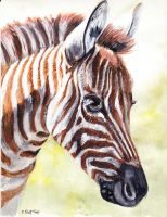 This is a Bby Zebra by Chicken-Priestess