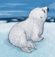 Baby Harp Seal by Nyctra
