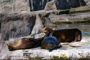 Seals I by expression-stock