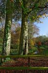 Minnowburn Beeches Autumn V by Gerard1972