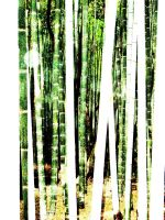 bamboo 2 by Saphiel89