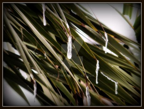 Tree with Icicle drips 2 by roxyms