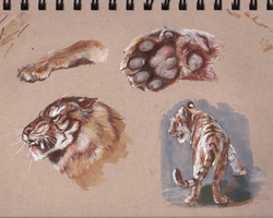 Tiger Studies by Mevrona