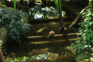 Koi Bolz Conservatory by WisScout