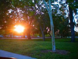 Cherry Park by veronicagibson