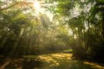 Chitwan National Park HDR by FinnianTerra