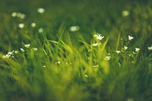 Green Grass Flowers II by Freggoboy