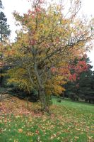 Park Trees Stock 2 by CNStock