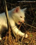 big white cat on hunting by Mari-Ghostly