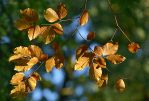 alternating colors of autumn VI by SvitakovaEva