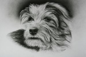 Terrier by jamie7eade