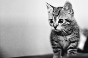 BW kitty by shadddow
