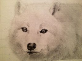 White Wolf by FlaccidSquid