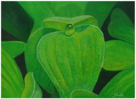 Morning Dew on Water Cabbage by aakritiarts