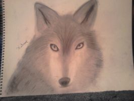 Charcoal Wolf by GoddessSpiritwolf