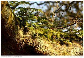 Cornish Ferns by In-the-picture