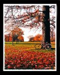 autumn in the park by settenkedo