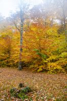 White Mountains  Fall Foliage  009 by FairieGoodMother