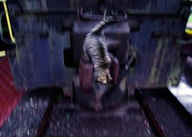 Cat leaving the Train by RandyHughes