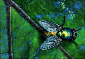 The fly. by L0THRINGEN