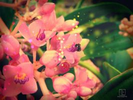 Of Faerie Dusts and Blossoms 1 by decayedmatter