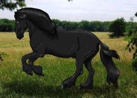 Friesian by Horsegirl558