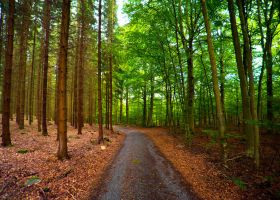 Spruce forest meets beech forest by Sekundkvadrat