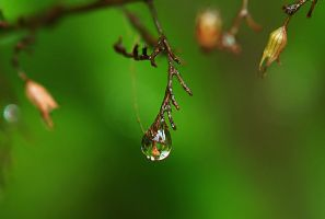 Drop of rain by Nataly1st