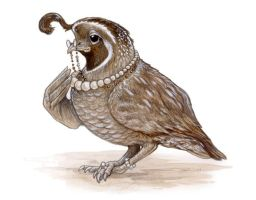 Society Quail by ursulav