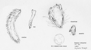 Eastern Chipmunk Study by LeccathuFurvicael