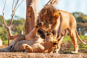 Play Time by daniellepowell82