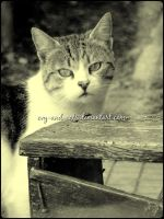 695 by evy-and-cats