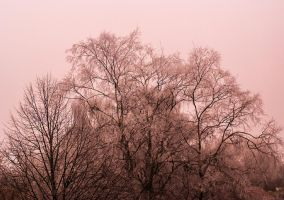 Trees by bearfighter