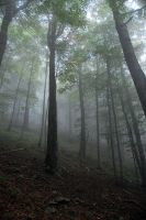 mist at mountains by wariatka
