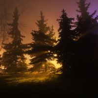 feel the night, feel the mist II by JoannaRzeznikowska
