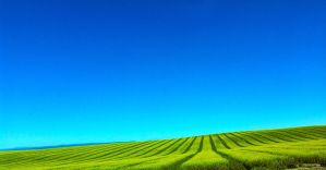 Green Fields by OliverWDahl