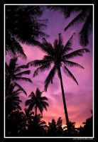 Psychadelic Palms by aFeinPhoto-com