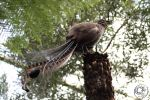 Shake your tail feather by jakwak