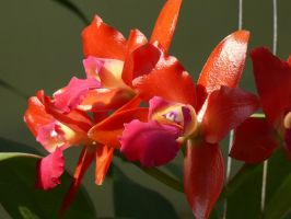 My Orchid7 by Otoff