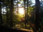 Sunshining Through Trees by KerriganClearwater